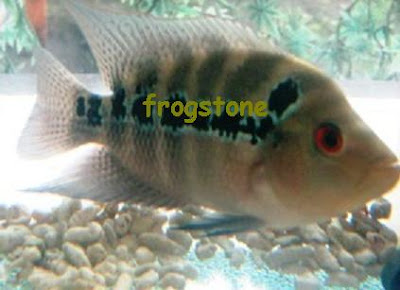 how to treat stressed fish