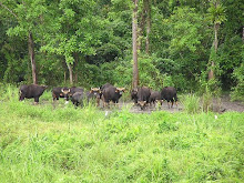 Chapra Mari Forest