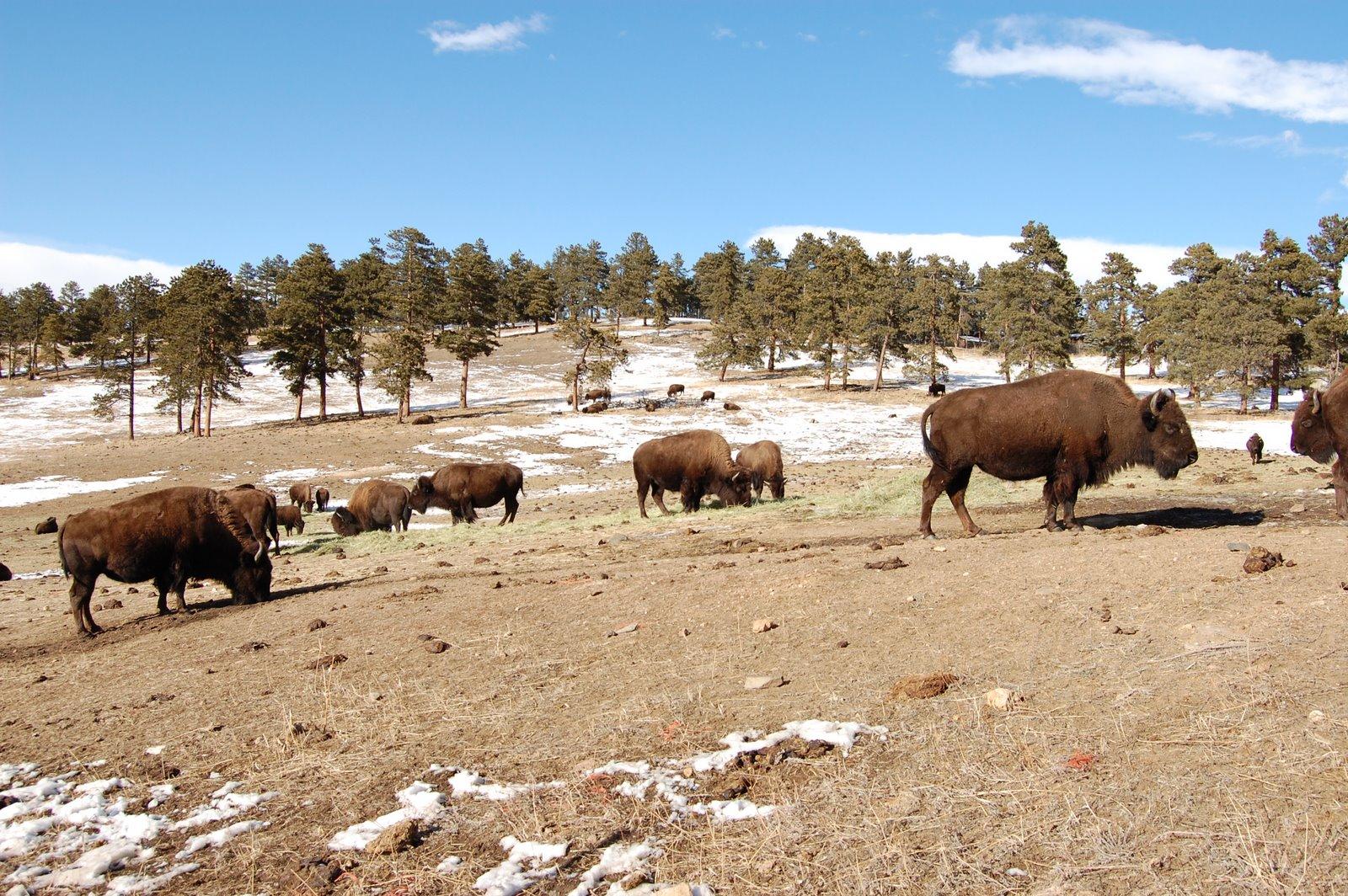 Life At 8 300 Evergreen Colorado