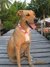 Agly(Ronda)kutyám:)