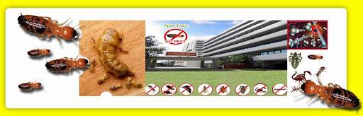 กำจัดปลวก กำจัดแมลง โดยใช้สมุนไพร รวดเร็ว ~ทันใจ 24 ชม.~@-@~ NO.1