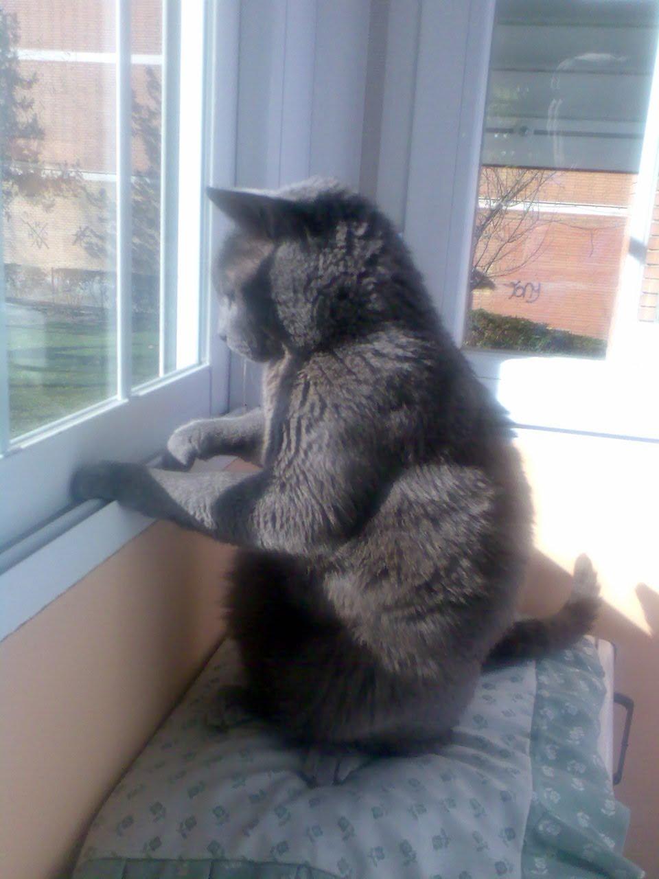 El gato de casa abril 2010 - El gato en casa ...