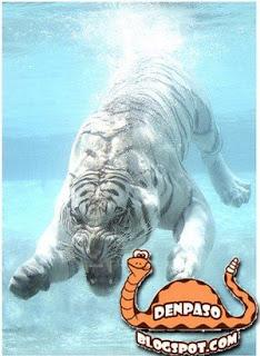 Приколы Новый год 2010 Год белого тигра