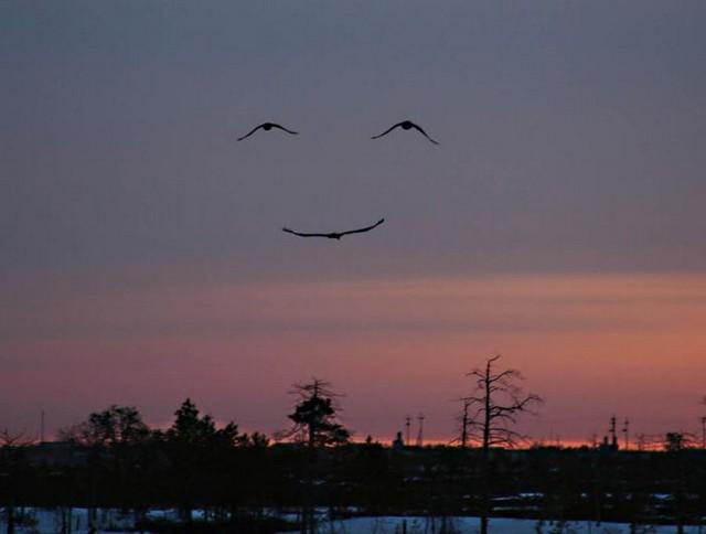 Alza sempre gli occhi verso il cielo.....