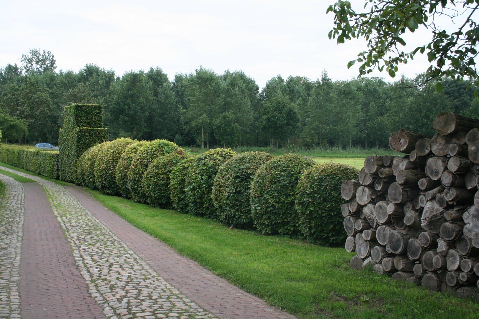 Suingiardino gardens in life: gennaio 2011