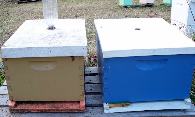 Single Story Beehives 280 10 Frame Early Prices
