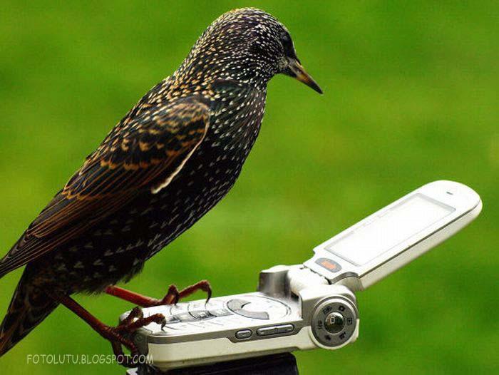 Seandainya si burung punya BB, pasti dia ngetiknya bisa lebih cepet
