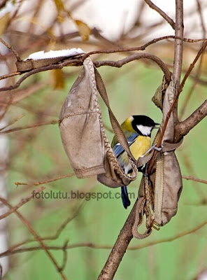 Burung Nakal Bersarang di Bra