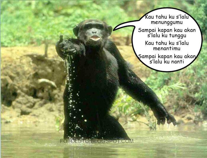 Kau Tahu Aku Selalu Menunggumu, Kata Si Monyet