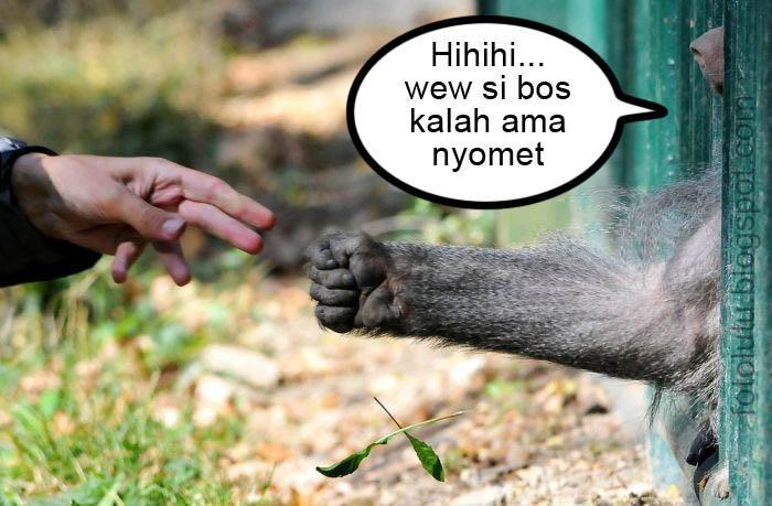 Manusia Kalah Sama Monyet
