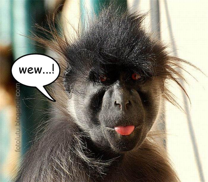 Monyet Jelek Ngeledek