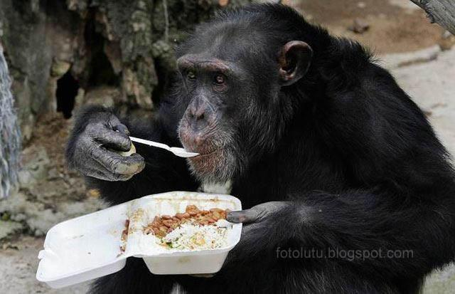 Makan Dulu Coy