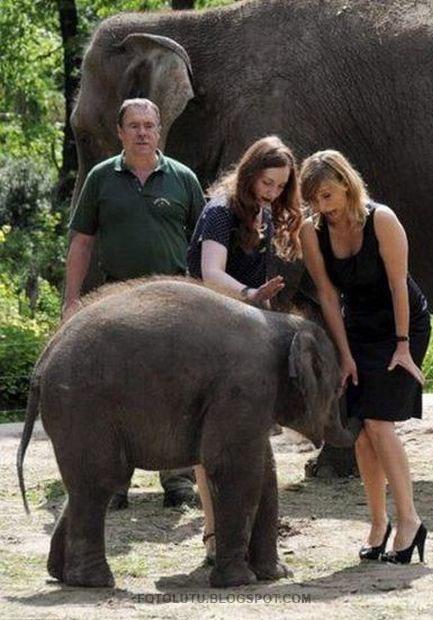 Gajah Nakal, Belalainya Masuk Ke Dalem Rok