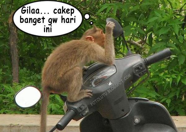 Monyet Narsis Udah Dong Nyet Jangan Ngaca Mulu
