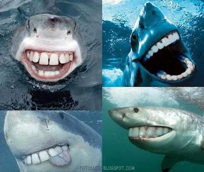 gambar hewan - foto ikan hiu