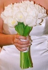 Bouquet de tulipas brancas .Lindo!!