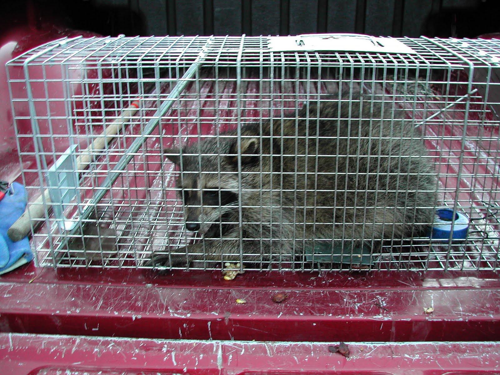 backyard nuisance animals carolina shooters club