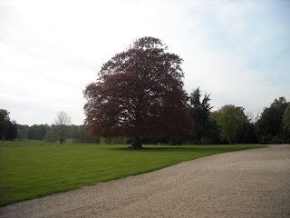 The parkland to the west front of Basildon Park