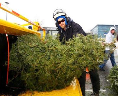 Nanaimo Christmas Tree Chipping 2014 - Nanaimo-Info-blog: Nanaimo Christmas Tree Chipping 2014
