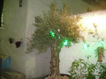El Olivo de la Alhaja