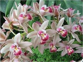 Agradeço do fundo do meu coração á Manuela Cardoso, a renovação do meu blogue...!