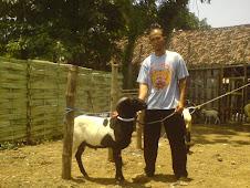 Bakalan Domba Tangkas