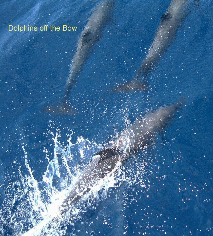 [dolphins+1+copy.jpg+]
