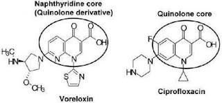 Voreloxin, Topo II poison