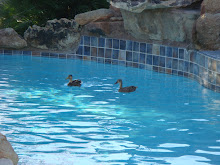 2 ducks in the pool...