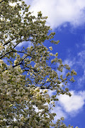 Blue Sky White Tree: Posted by Deidra Haigh at 7:00 PM No comments:
