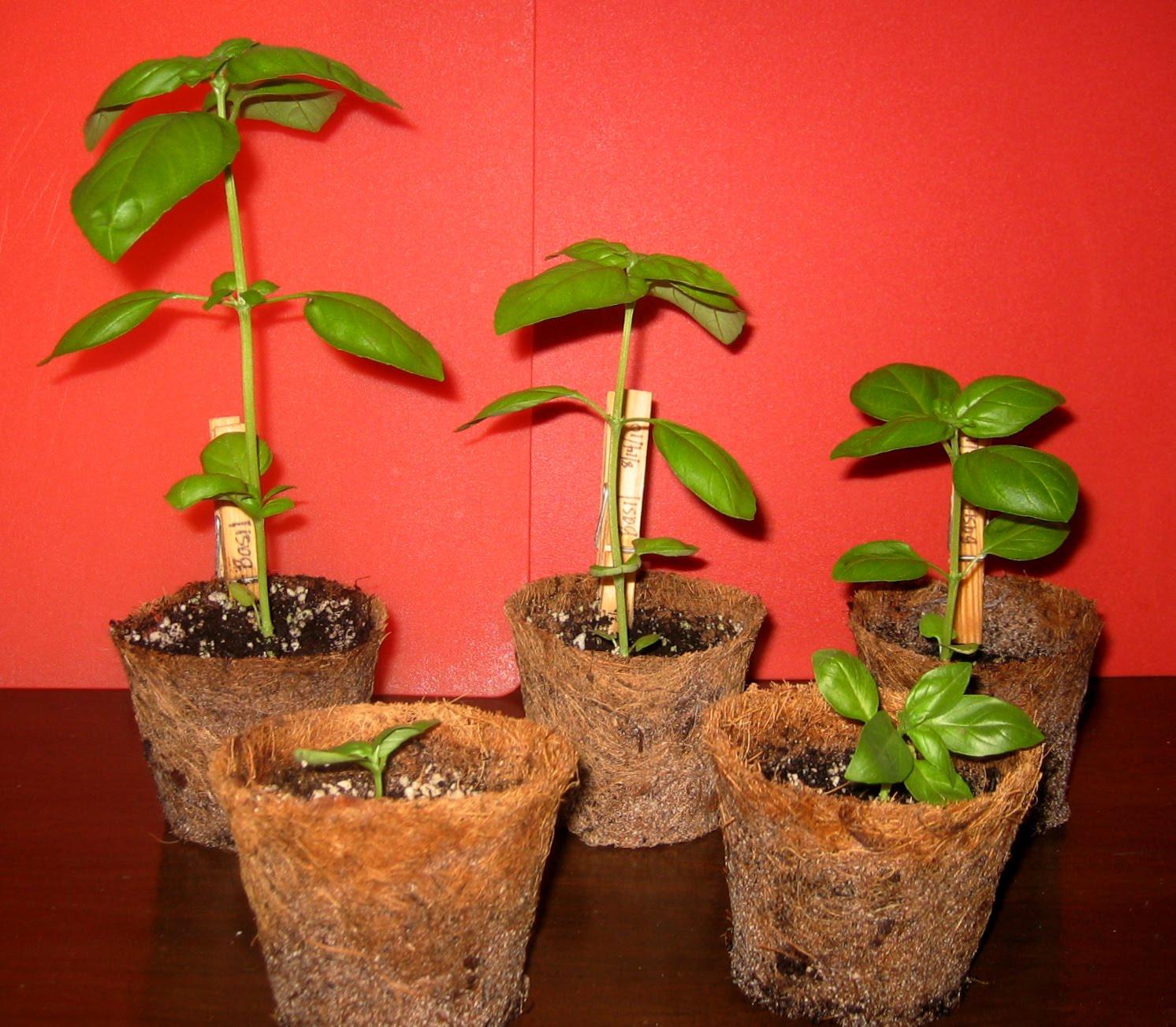 Led indoor gardening led grow light vs natural for Indoor gardening led