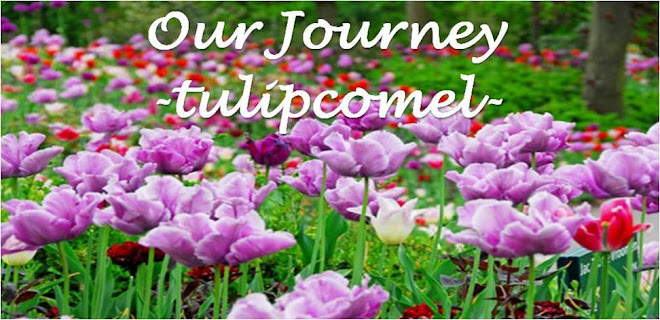 Our Journey -tulipcomel-