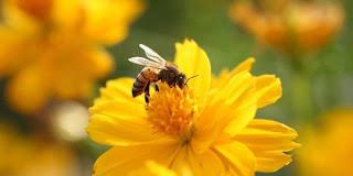 Lebah Lebih Pintar daripada Komputer