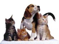 Blog de Perros y Gatos