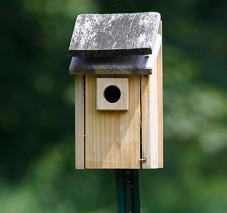 Consejos para crear un deslumbrante jardín de colibríes