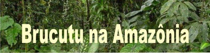 Brucutu na Amazônia