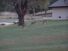 Daily visitors at Boiling Springs State Park, OK