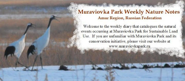 Muraviovka Park Weekly Nature Notes