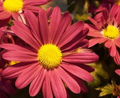 HPS Flower Power