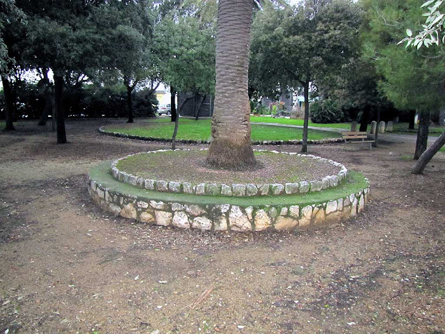Stone bench around a palm tree, Livorno