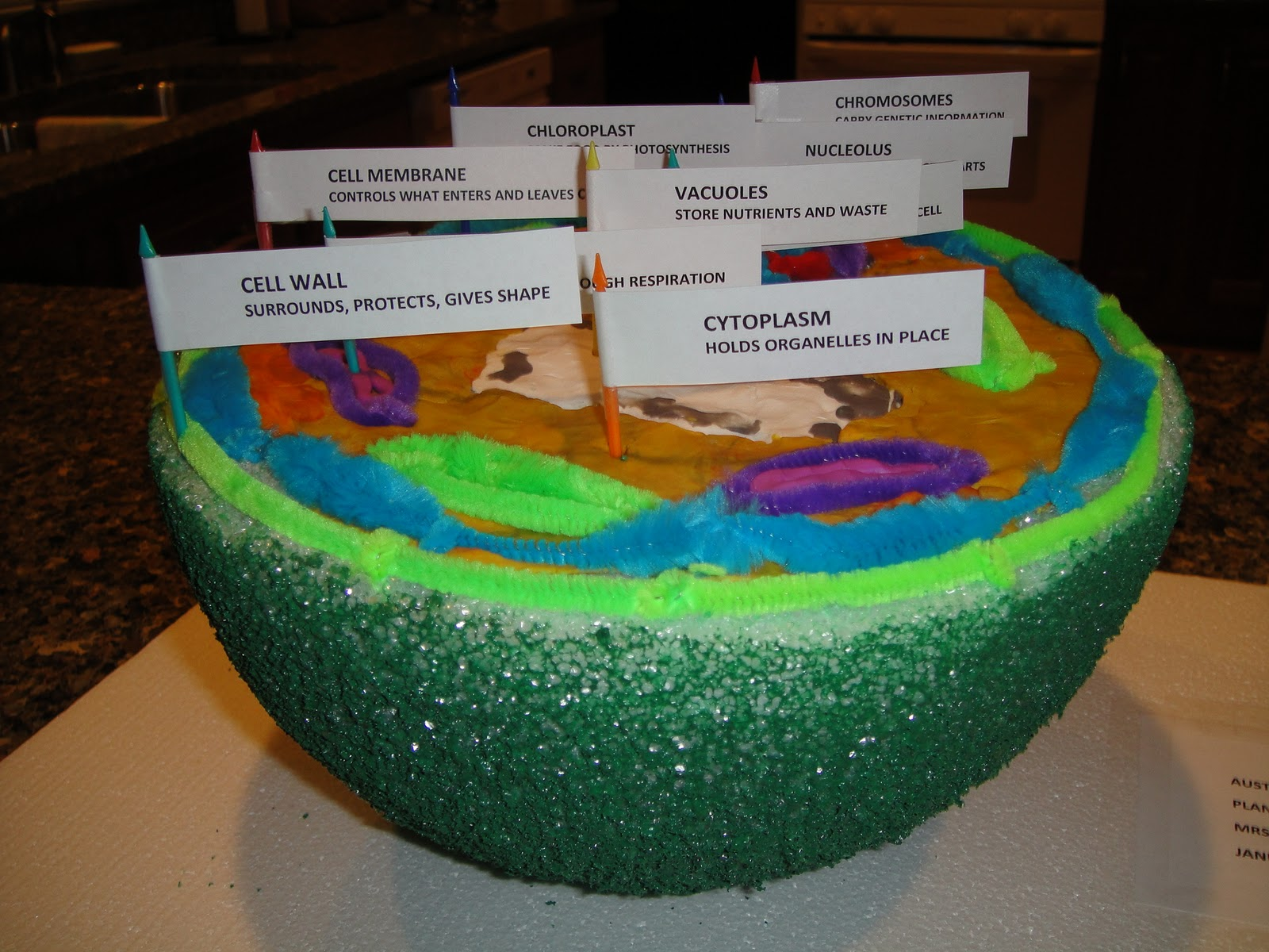 Plant Cell Styrofoam Model http://www.friendshiptea.net/2011/02/sixth-grade-science-project.html