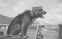 собака на корабле