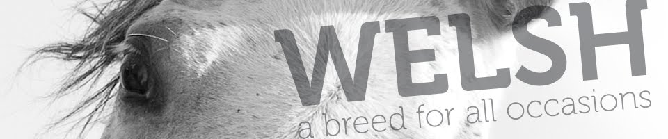Welsh - a breed for all occasions