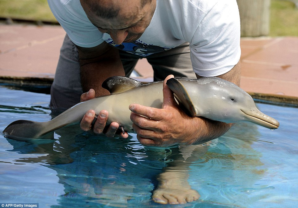 My second payment cute baby dolphin saved from death