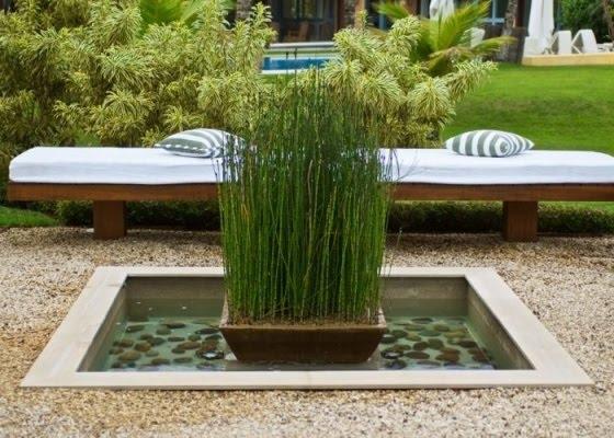 plantas jardim litoral : plantas jardim litoral:Plantas aquáticas – Imóveis à venda no melhor condomínio fechado
