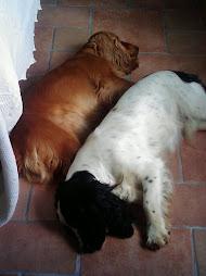 dormimos juntos