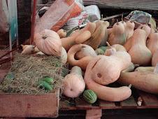 algunas verduras que fuimos cosechando