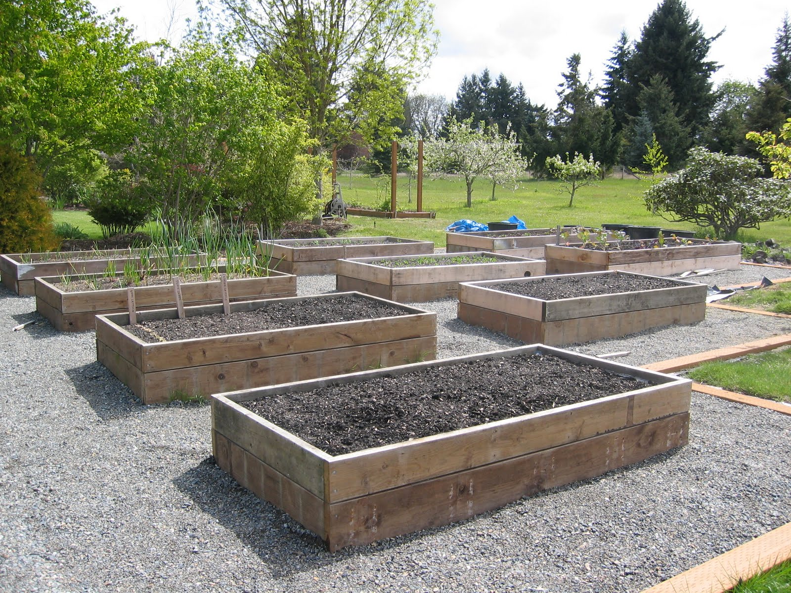 The tacoma kitchen garden journal raised vegetable beds for Raised vegetable garden bed designs