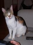 Leila (Maia)