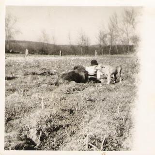 dog farrusco lassie cão paisagem criança boy rapaz preto e branco infância memória